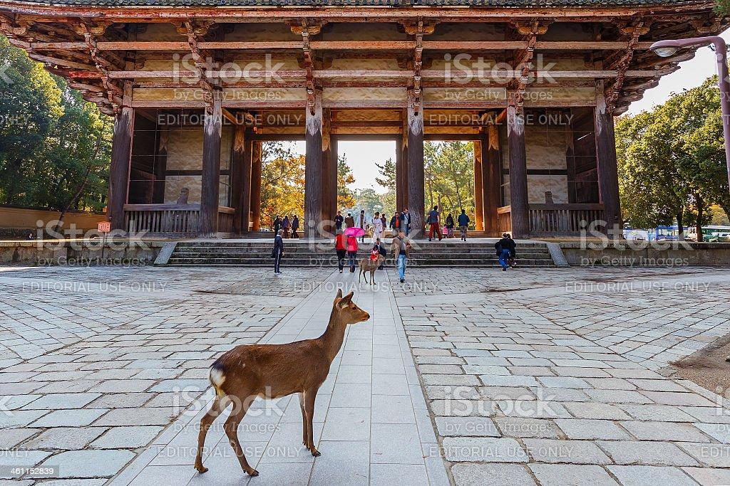 Nara, Japan - November 16 2013 stock photo