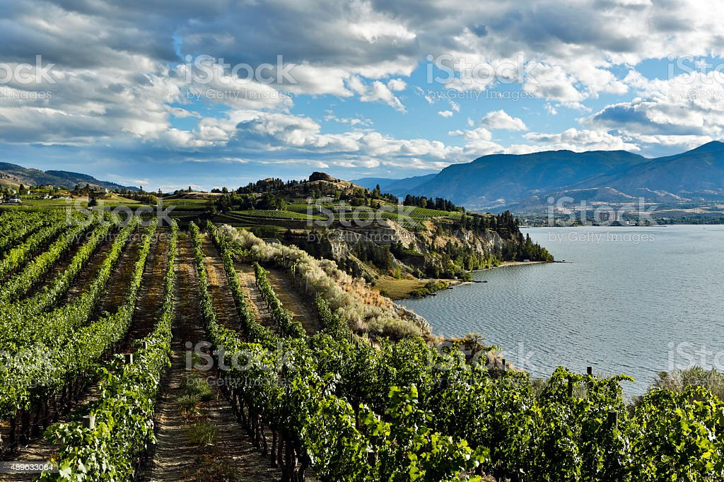 Naramata Vineyard Okanagan Valley stock photo