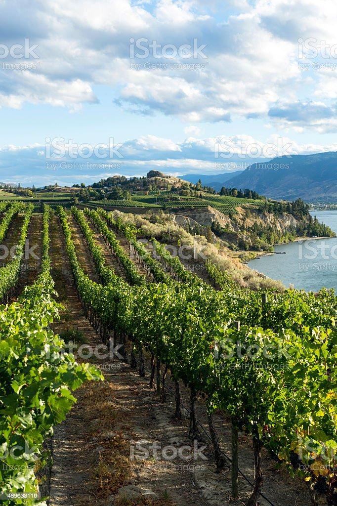Naramata Vineyard Okanagan Valley stock photo