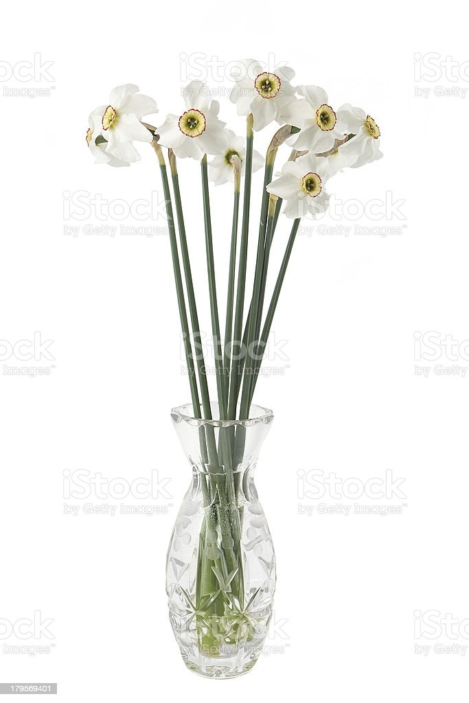 Narcissus flower in a vase royalty-free stock photo