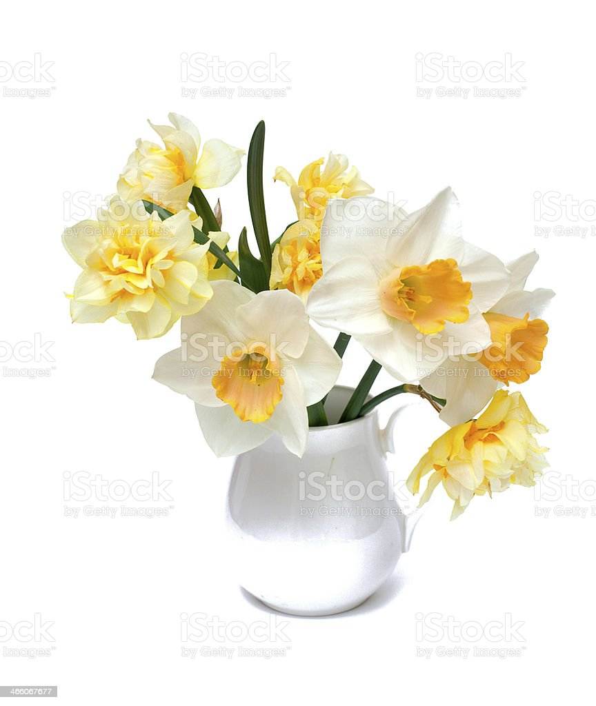 narcissus flowers in a pitcher royalty-free stock photo