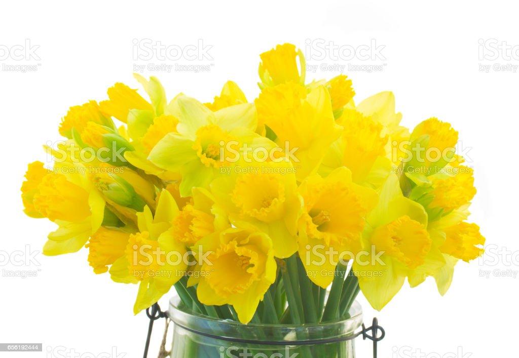 Narcissus in vase stock photo