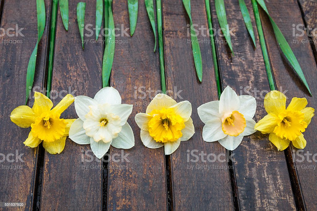 Narcissus on the wooden background stock photo