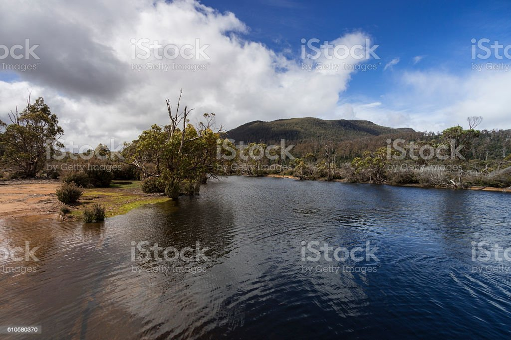 Narcissus River stock photo