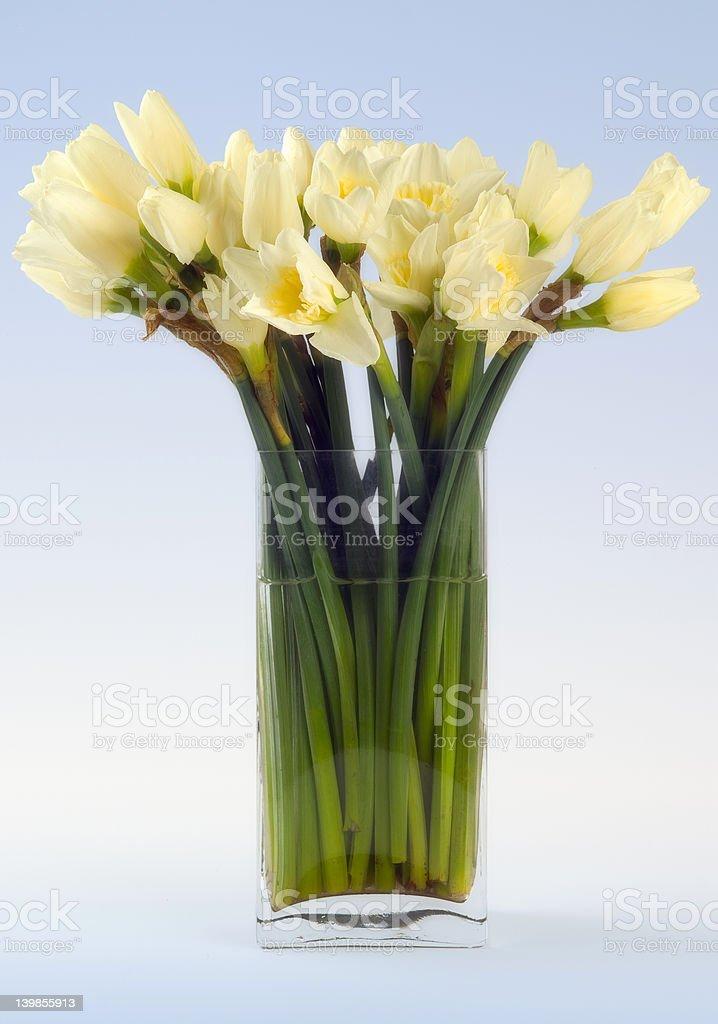 Narcissus still life royalty-free stock photo