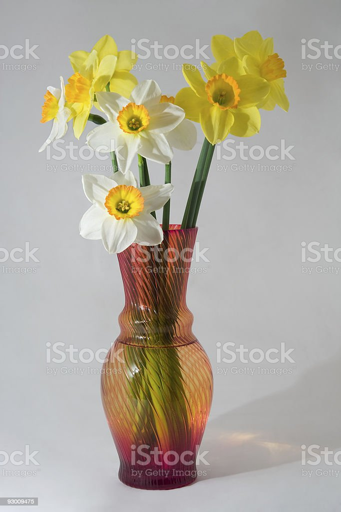 Narcissuses in a vase royalty-free stock photo