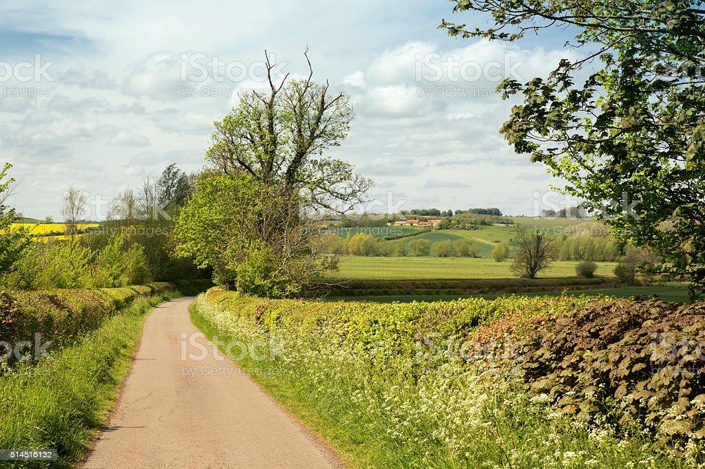 Narrow Country Lane in Springtime stock photo