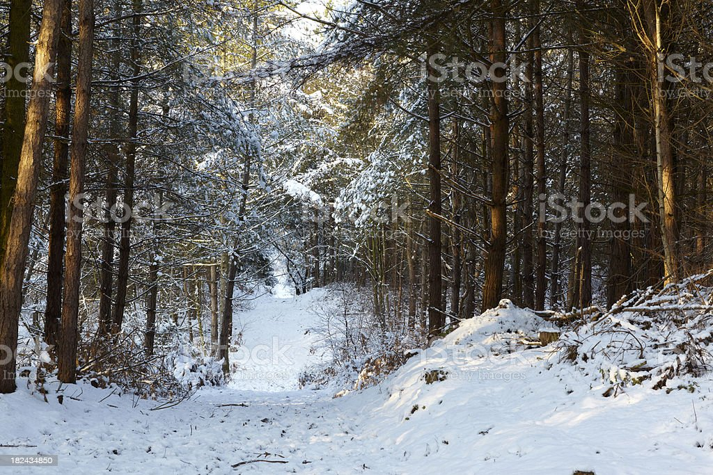 Narrow footpath in snow through dense forest during winter royalty-free stock photo