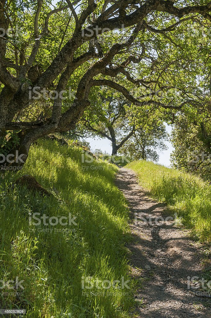Narrow forest path with oak trees and long grass stock photo