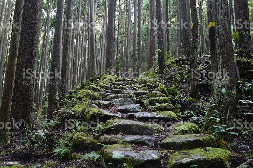 Narrow path of the forest stock photo
