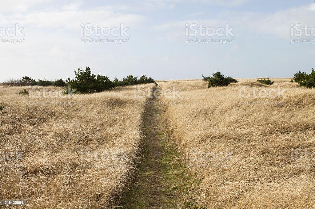 Narrow Path Through A Grassy Dune stock photo