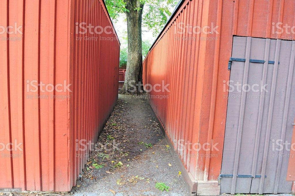 Narrow path with a tree stock photo