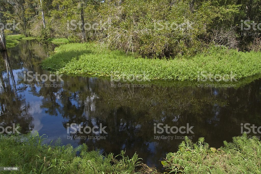 Narrow river bend marshy bank and trees stock photo