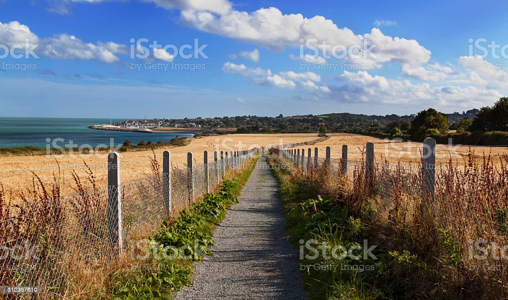 Narrow road with fild of wheat on the sides stock photo