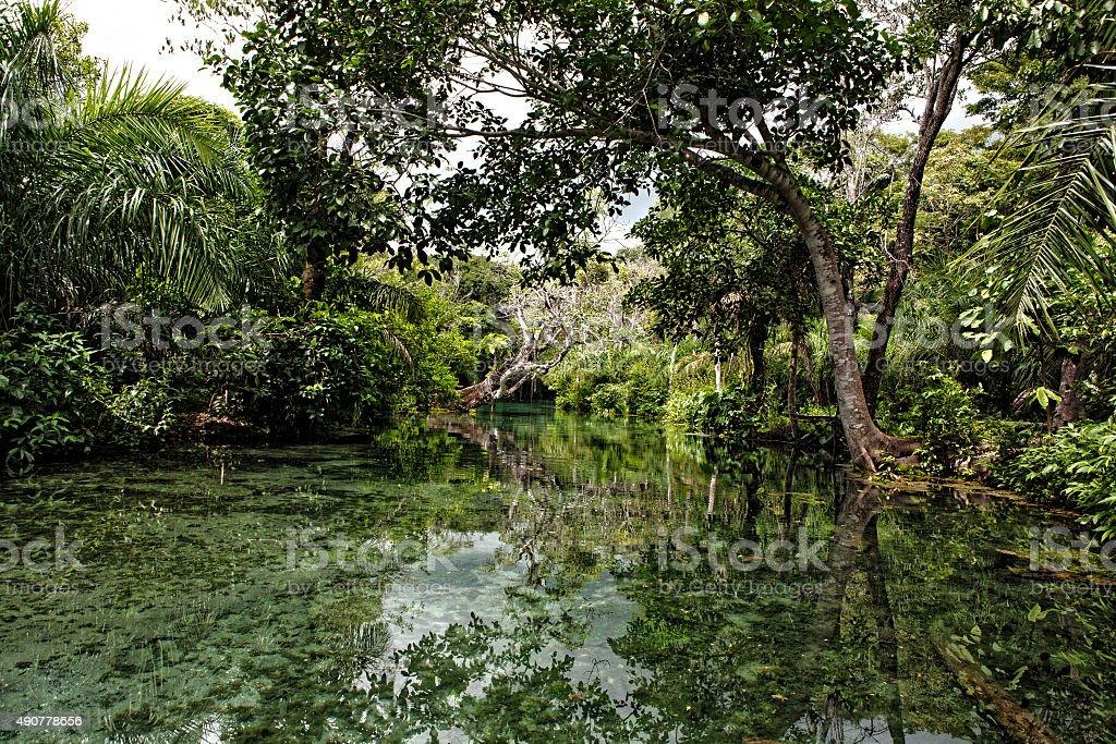 Nascente Azul stock photo