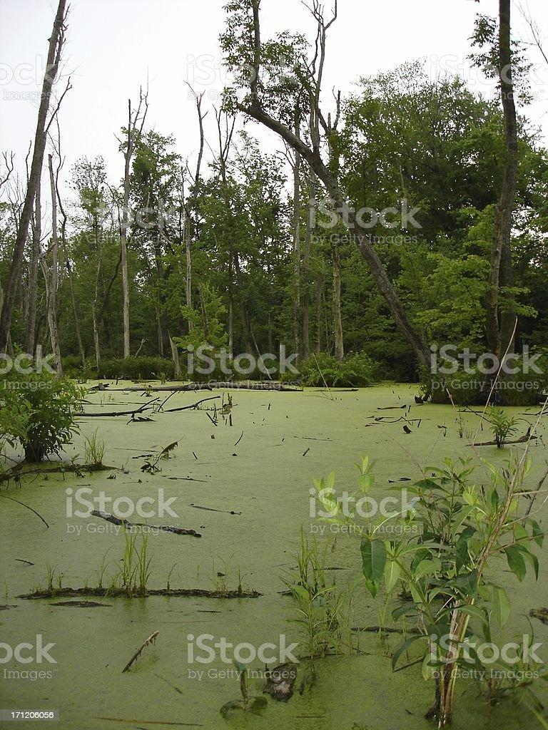 Nasty green swamp stock photo