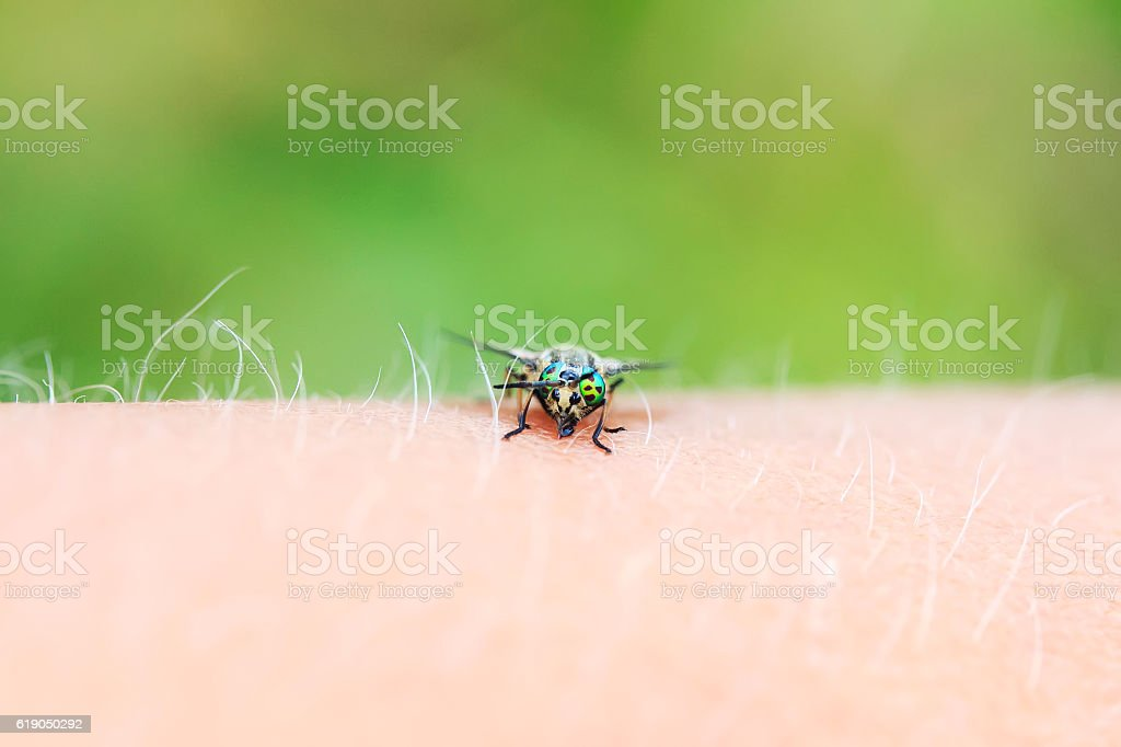 nasty insect gadfly sits and bites the hand stock photo