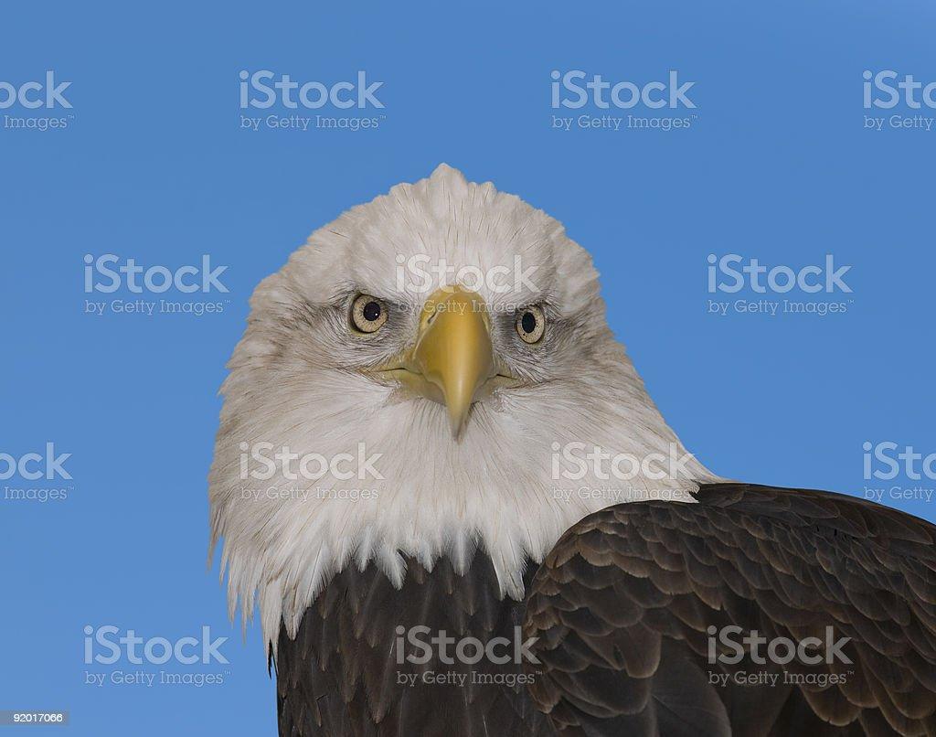 National bird stock photo