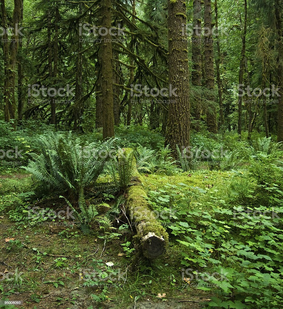 National Forest royalty-free stock photo