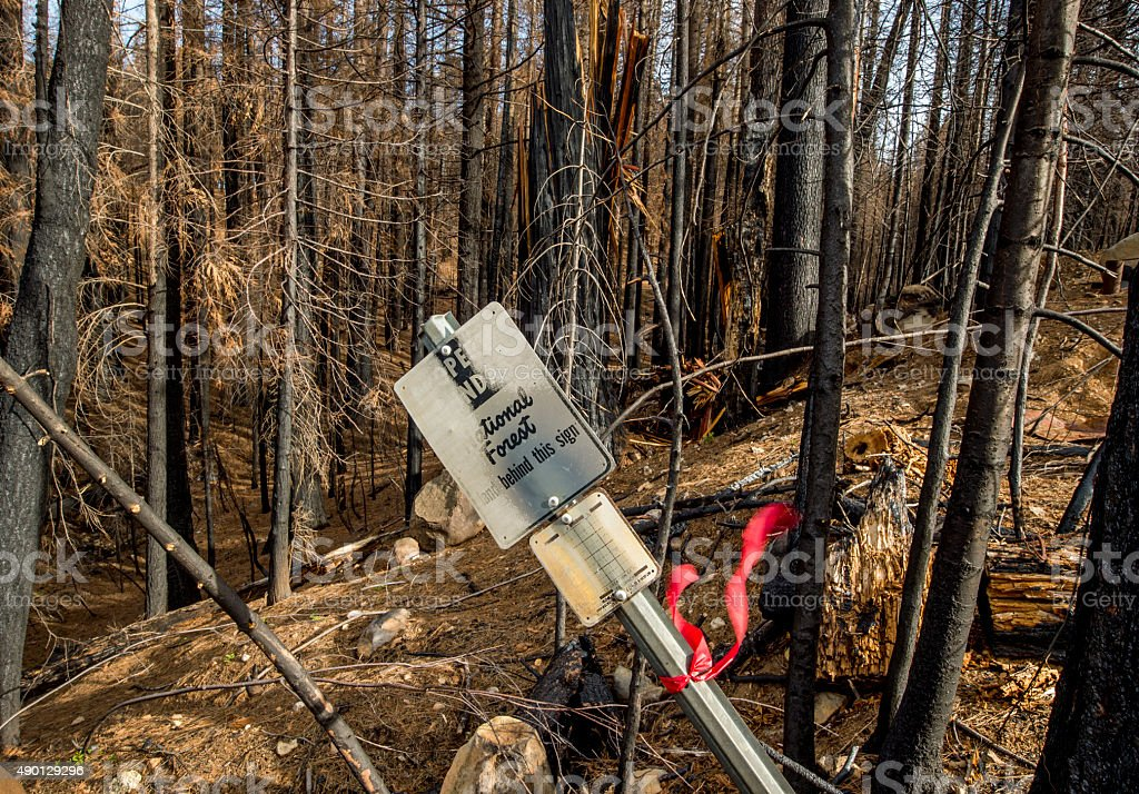 National Forest Sign after the King Fire, California stock photo