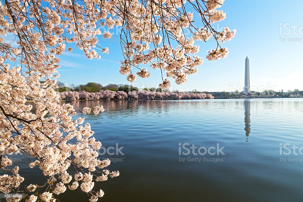 National Monument and Tidal Basin waters during cherry blossom festival. stock photo