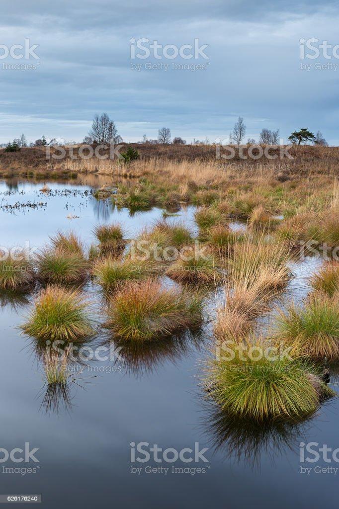 National Park Hautes fagnes high venn Belgium. stock photo