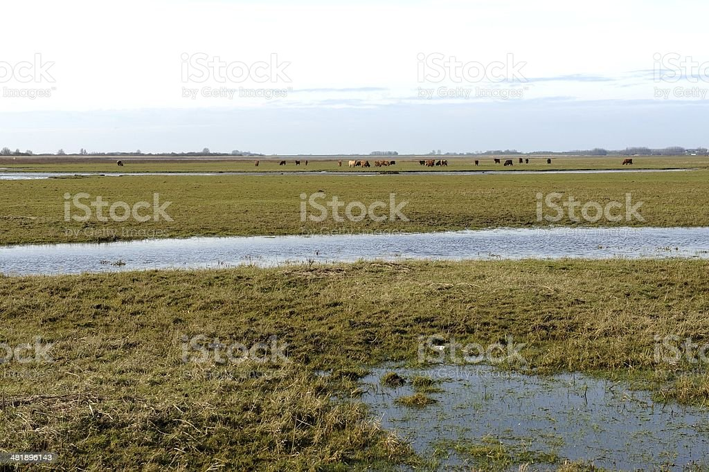 National Park Lauwersmeer in The Netherlands stock photo