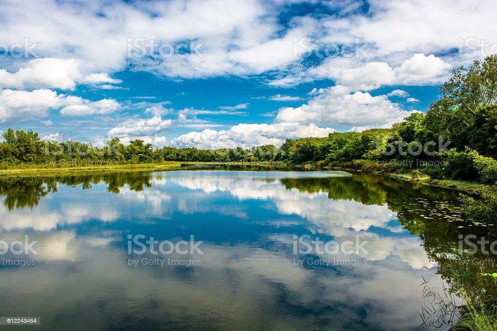 National Park Wetlands of the River Danube in Austria stock photo