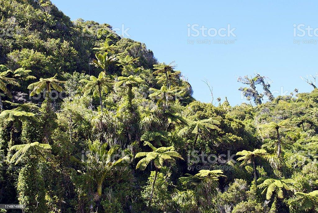 Native Bush Background, NZ royalty-free stock photo