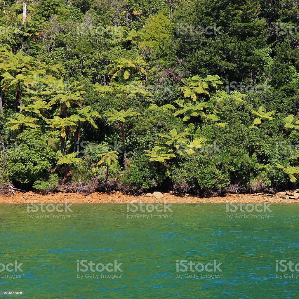 Native bush in New Zealand stock photo