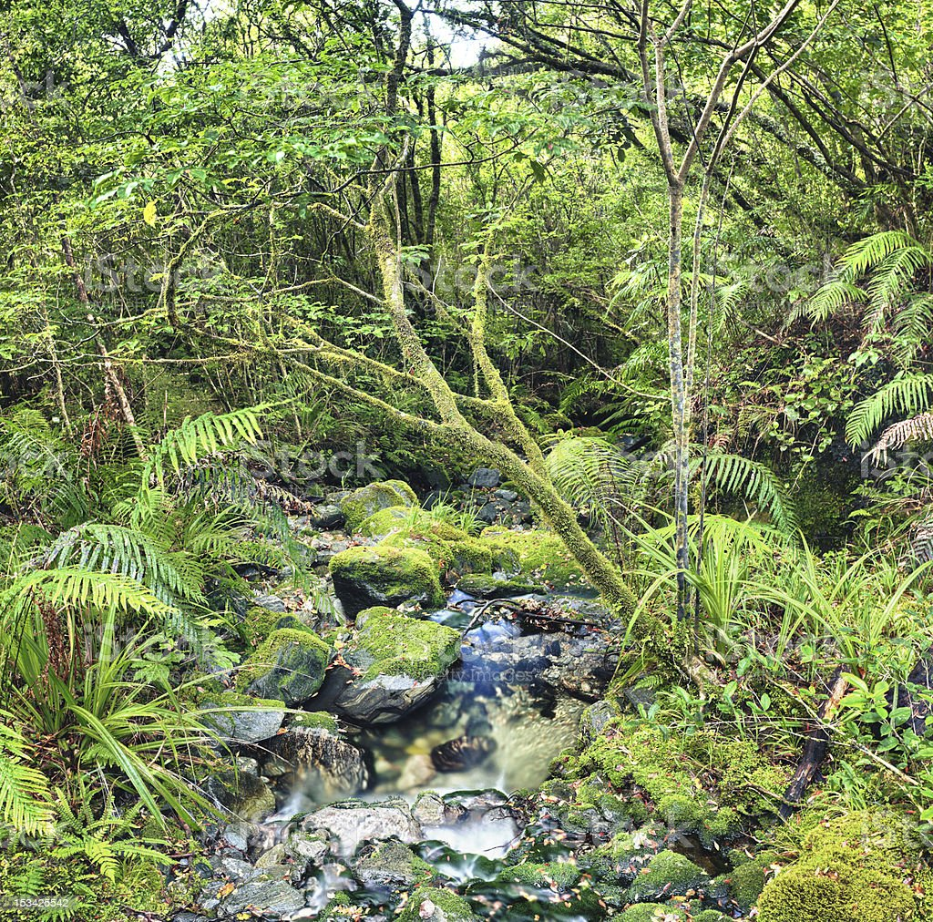 Native bush royalty-free stock photo