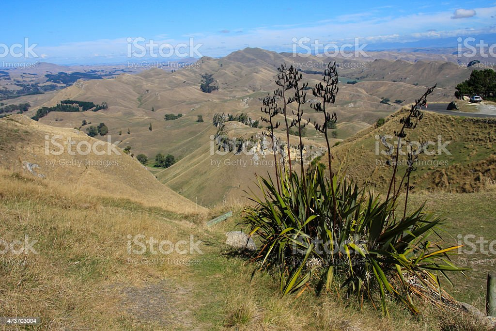 Native Flax, Te Mata Peak, Napier stock photo