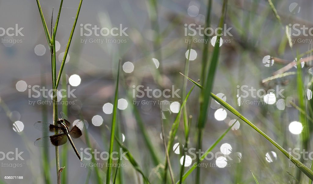 Native insect re-population and environmental reconstruction Asi stock photo