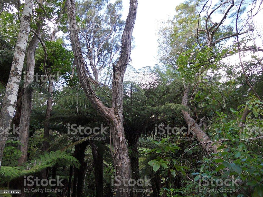 Native New Zealand Trees stock photo