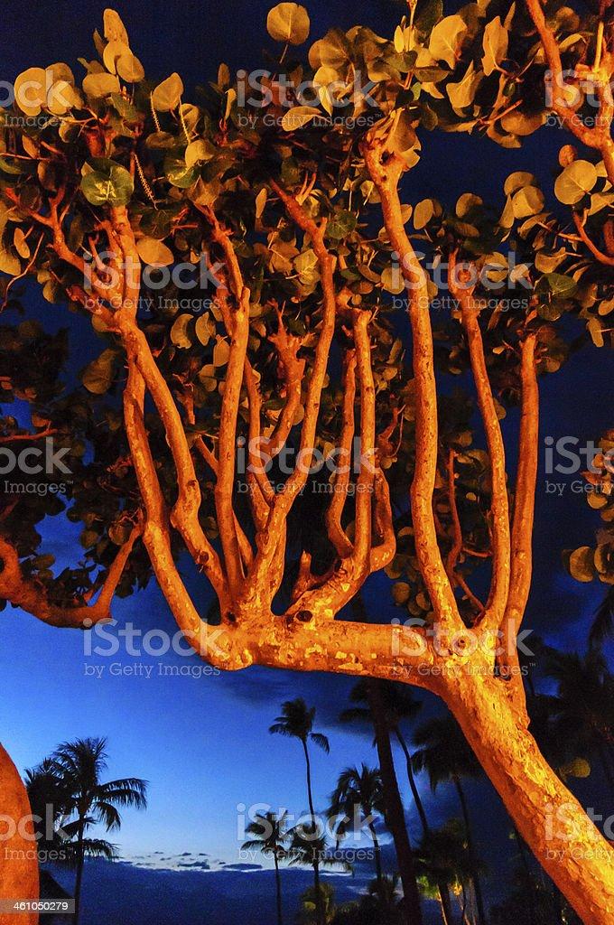 Native tree lit by artificial lights, Maui, Hawaii, USA stock photo