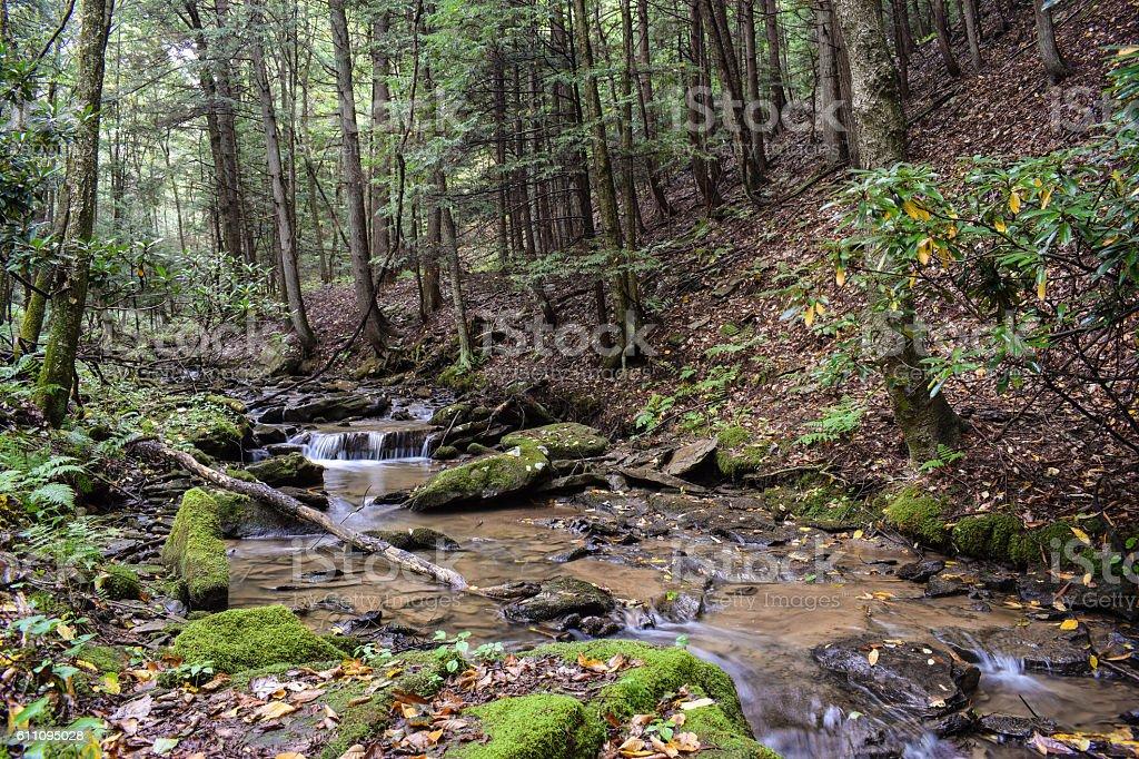 Native Trout Stream stock photo