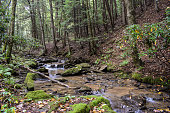 Native Trout Stream