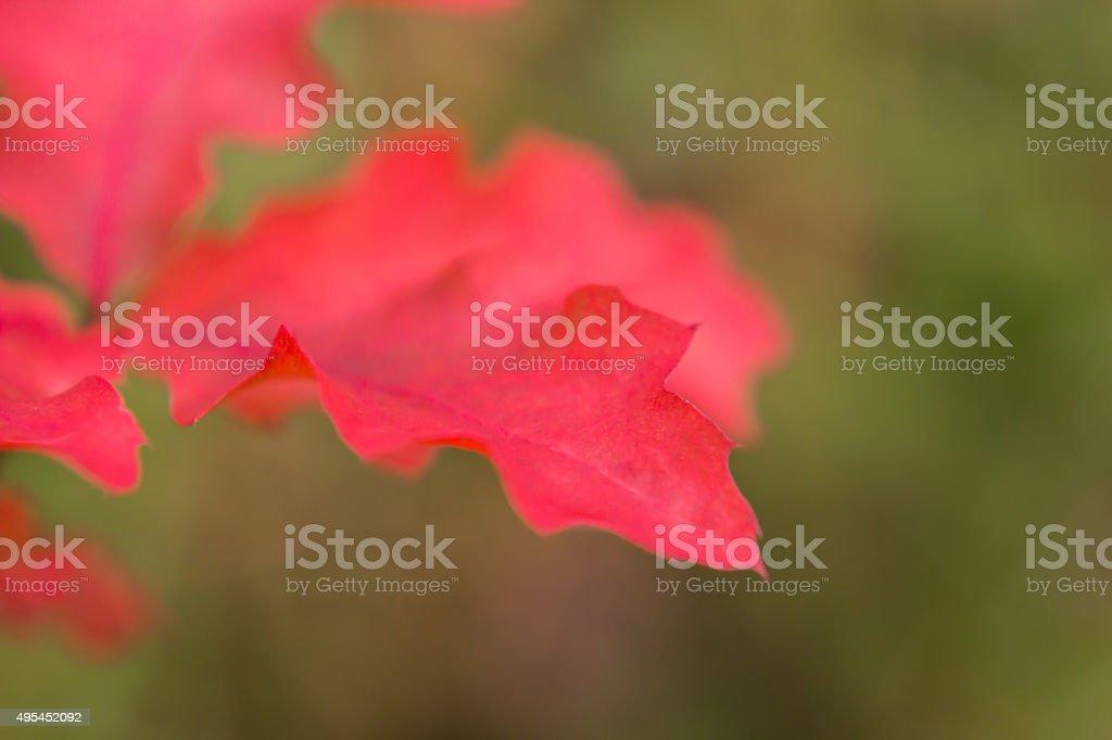 Natur Herbst Details Hintergrund stock photo