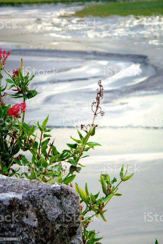 natura stock photo