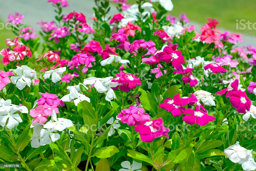 Natural and colorful flowers royalty-free stock photo