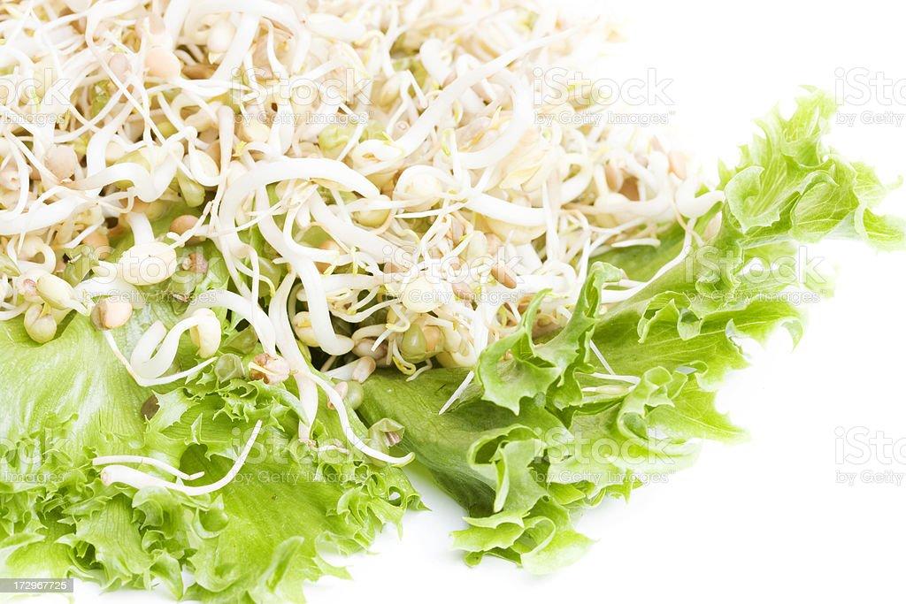 Natural antioxidant: Healthy Sprouts Salad stock photo