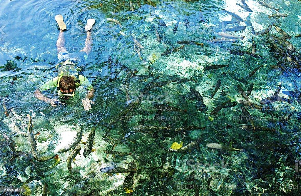 Natural Aquarium at Bonito, Mato Grosso state, Brazil stock photo