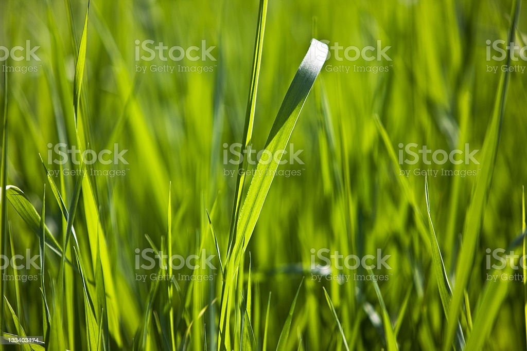 Natural backgroound royalty-free stock photo
