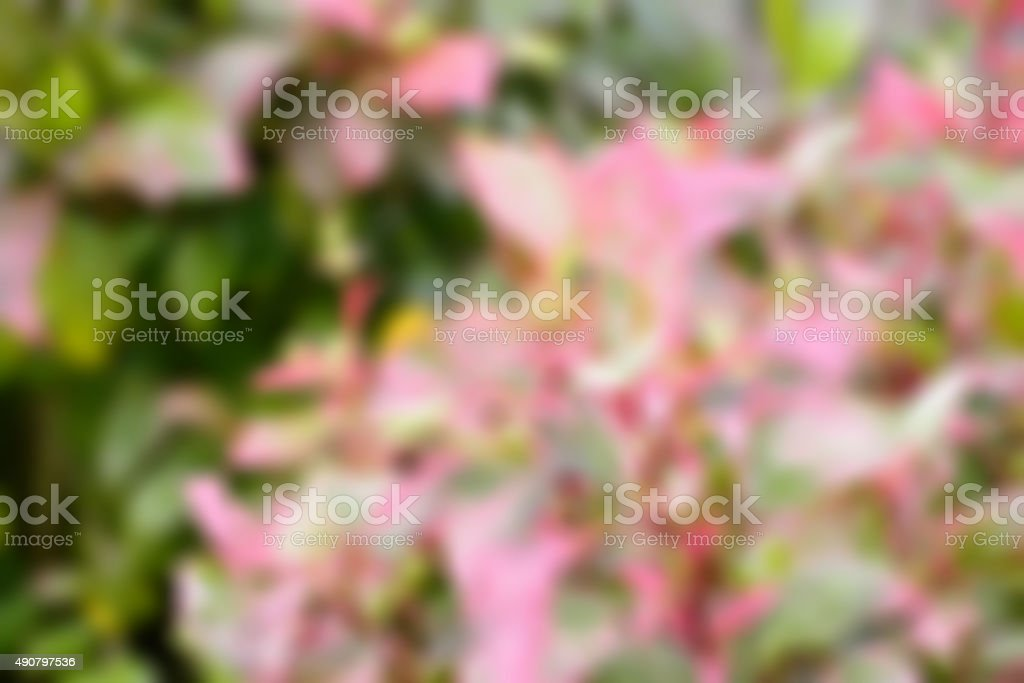 Natural background blur stock photo