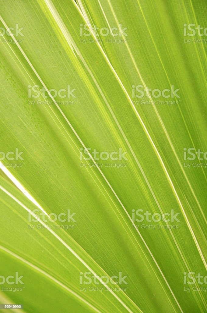 Natural background: bright green palm leaves in sunlight stock photo
