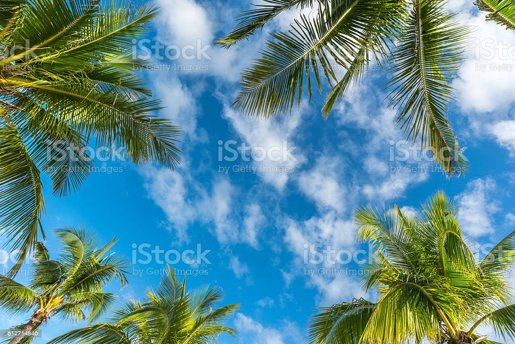 Natural background from Boracay island with coconut palms tree l stock photo