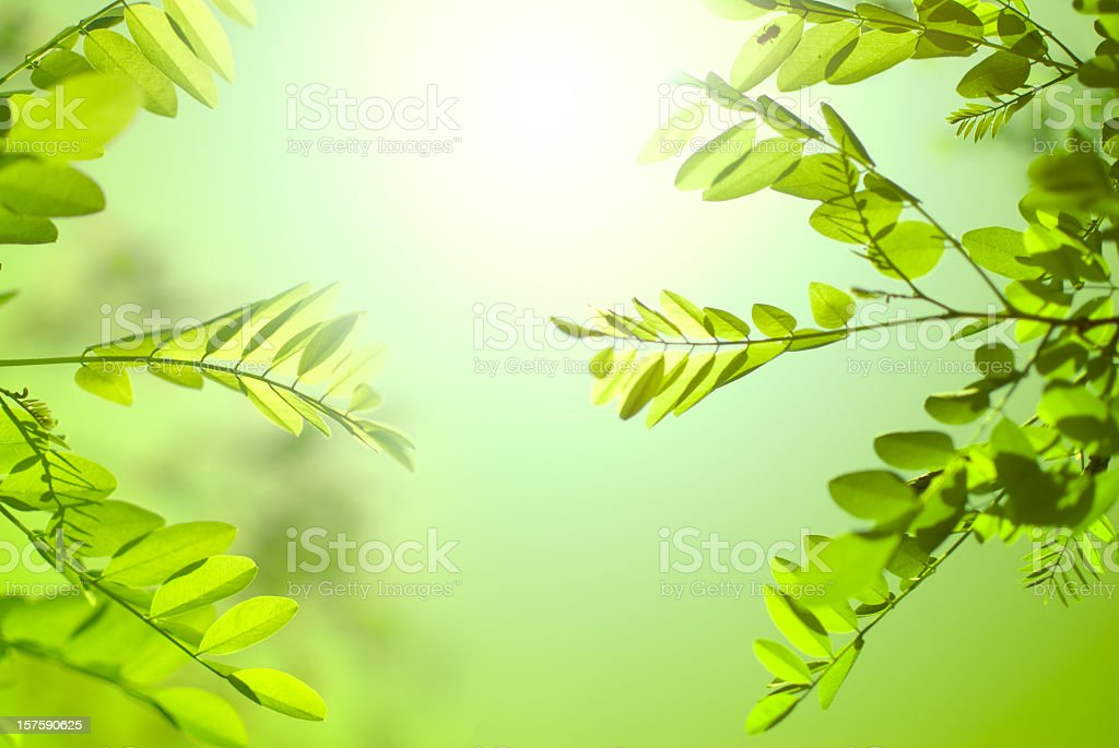 Natural background royalty-free stock photo