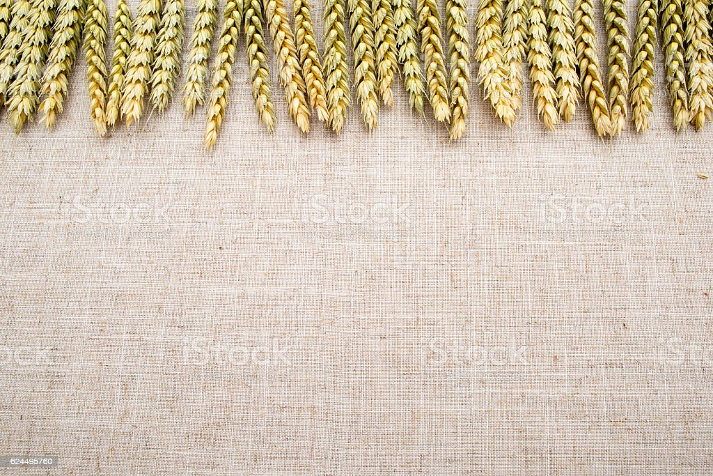 Natural background, wheat and linen fabric. stock photo