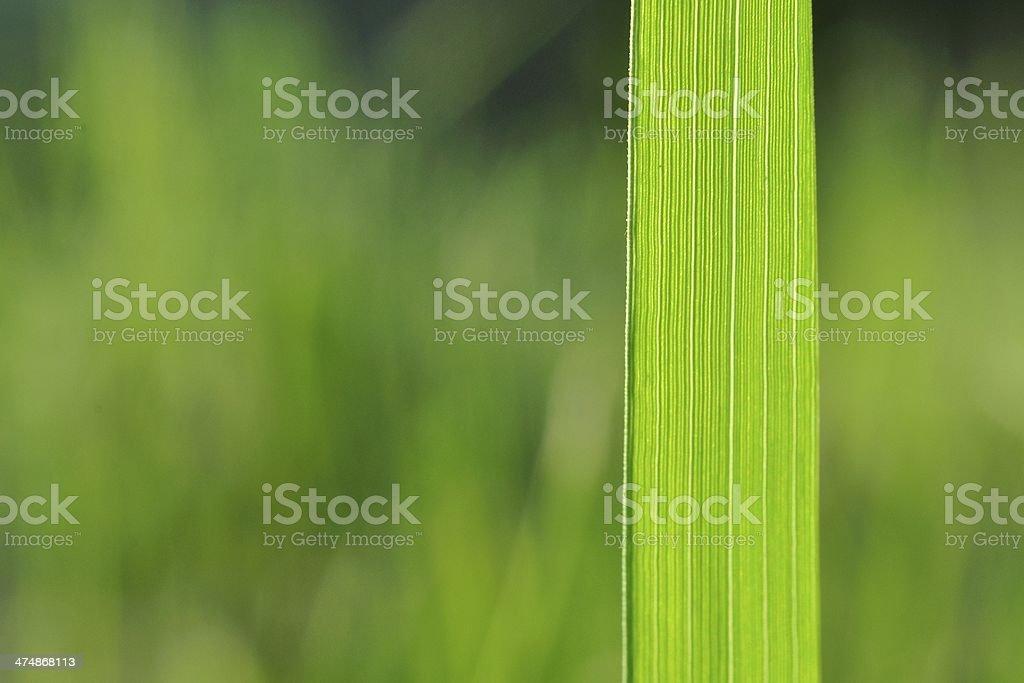 Naturalne tło z zielona Trawa blade) zbiór zdjęć royalty-free
