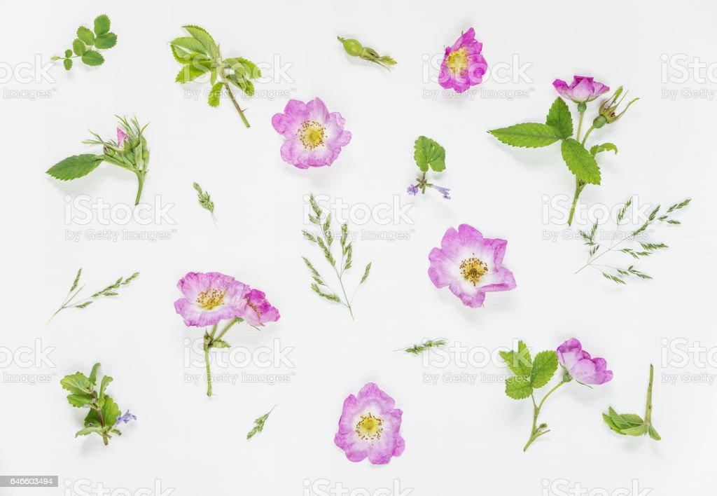 Natural background with pink wild rose flowers stock photo